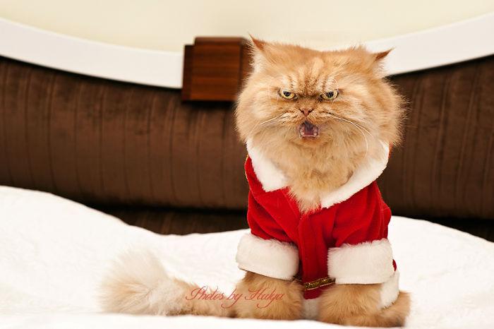 garfi-evil-grumpy-persian-cat-31__700