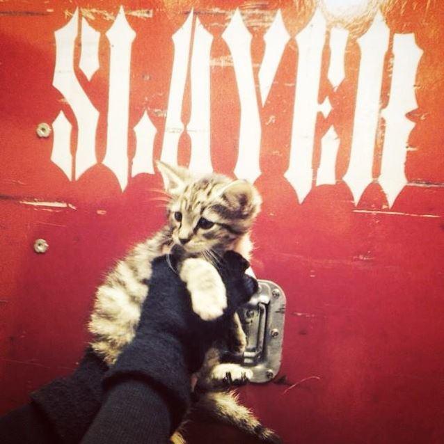 gypsy-slayer-kitten